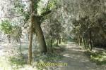 Пионерский проспект в районе Джемете